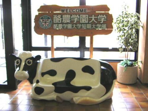牛も歓迎してくれます