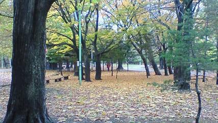 札幌はもう冬に向かって