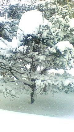 白と枝とのコントラスト