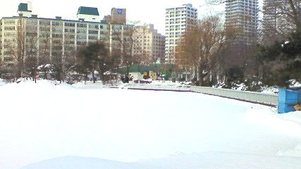 冬の中島公園菖蒲池