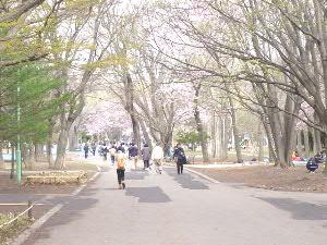 札幌円山公園では(1)