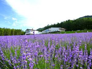 富良野高原ホテル・ラベンダー畑