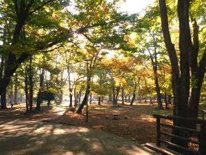 円山公園の朝(1)