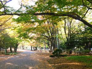 円山公園の朝(2)、毎年の場所から