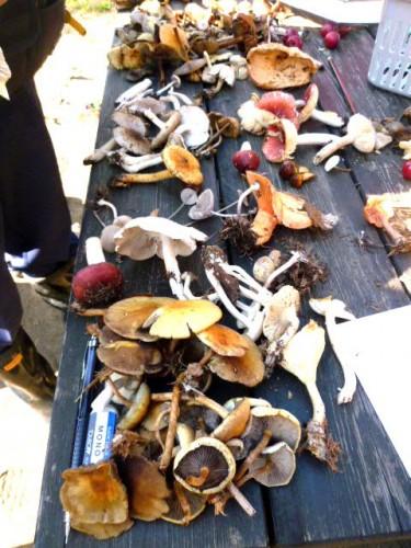 森でキノコ採集、多様ですね