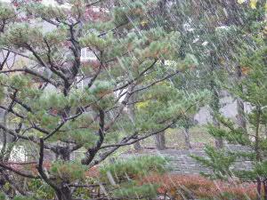 10月26日、今年の札幌の初雪です!