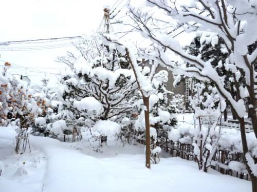 二日続きの雪、20センチくらいでしょうか