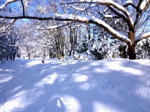 円山公園入り口20mから北方面を望む