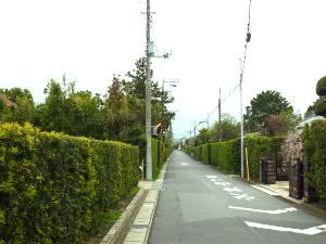 安房高へ続く生垣の通り