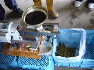 菜種から搾油(手前に)、残りカス(右)