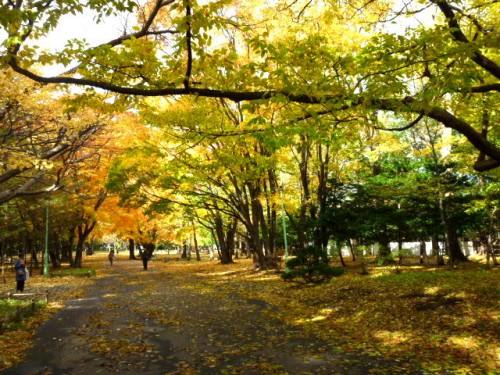 円山公園入口近くのいつものポイント