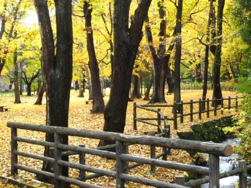 神宮から円山公園