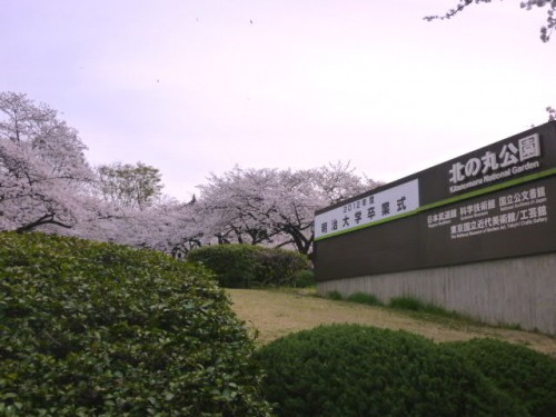 東京・北の丸公園:武道館とサクラ