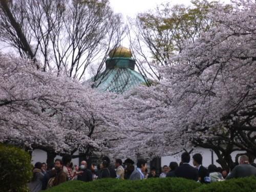 北の丸公園:武道館とサクラ
