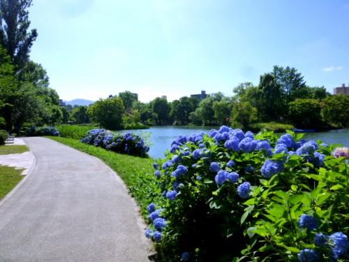 真夏の中島公園菖蒲池