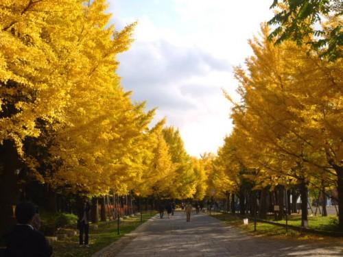 深まりゆく秋・中島公園
