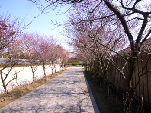 薬師寺・本坊への道