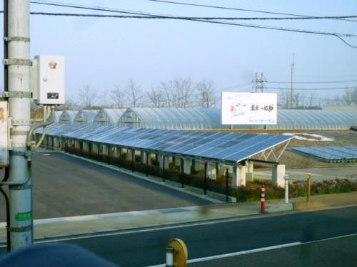 小松空港近く、ここでも太陽光発電による温室栽培