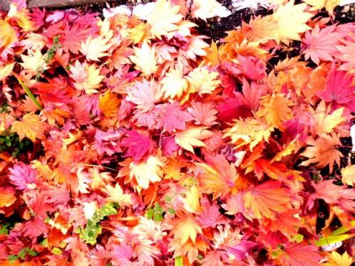 庭の積もる色とりどりの「落ち葉」
