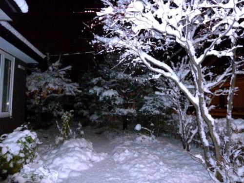 一昨日の夜、気が付くと庭の柿の実も雪かぶり