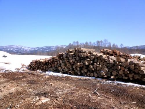 近隣からの木材を貯蔵