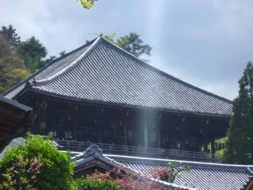 髙い位置からの大仏殿の背景が素晴らしい