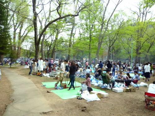 朝は比較的余裕の円山公園