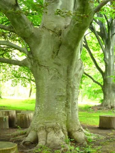 圧倒的存在感の樹木等