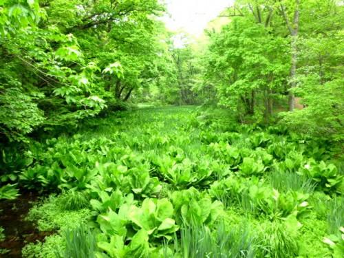 駅からわずか5分でこの札幌の古の湿地