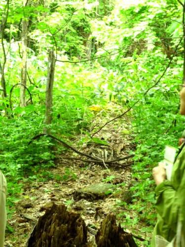 11年前の台風で倒れた大木、その後を観察する場で土に帰りつつある状況も