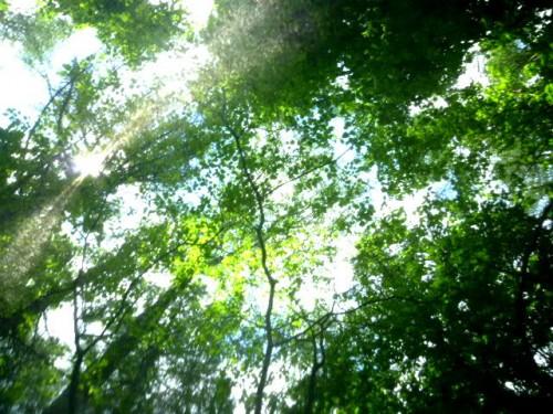 テントの中であおむけに空を見上げると