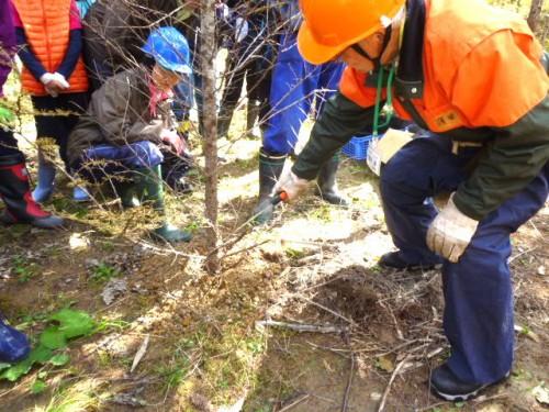 枝打ち、間伐の実技