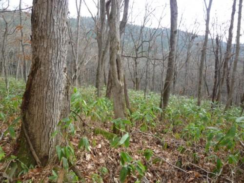 広葉樹林の明るい林床