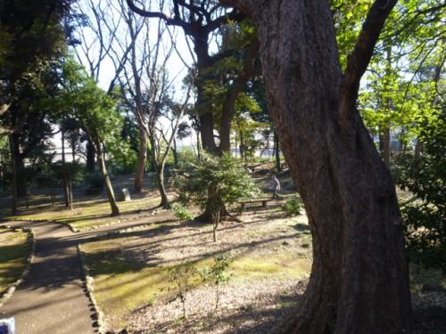 旧渋沢邸の広大な庭、茶庵跡も