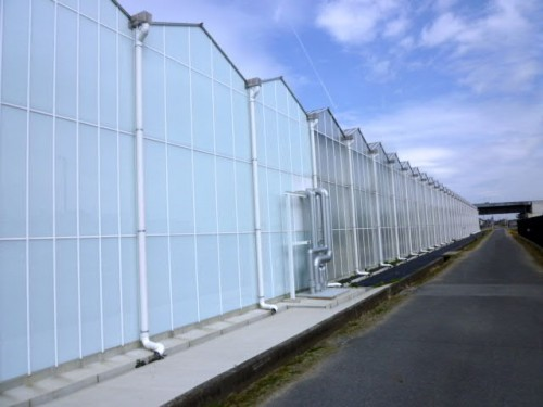 広大な土地に温室設置