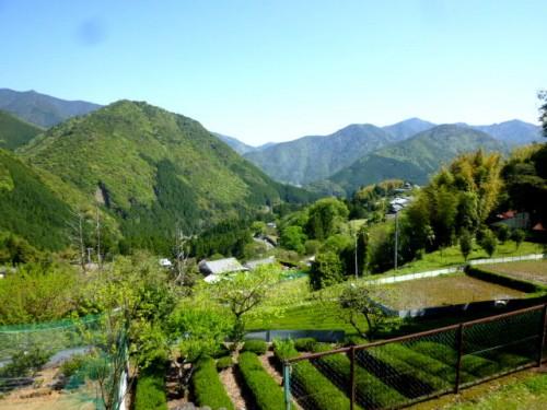 民家、茶畑の間を通り、遠くの山並みも美しい