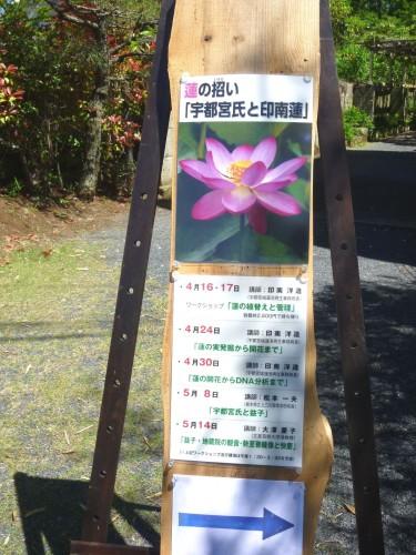 五角堂の特別展示、今回は「蓮」がテーマです!