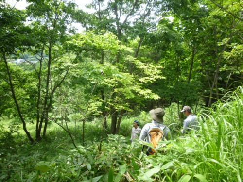 エゾエノキ植林エリア