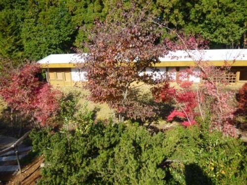 展示室横の庭も秋真っ盛り