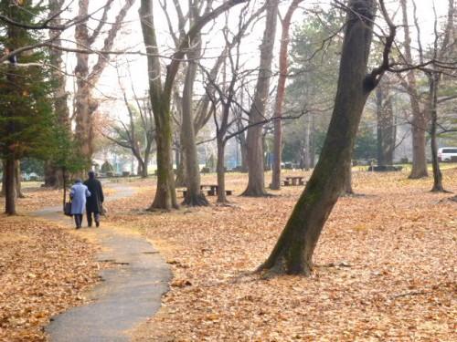 朝霧の札幌円山公園を歩く老夫婦
