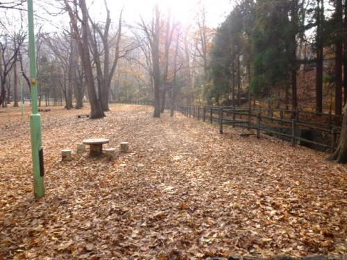 落ち葉と霧と日差し
