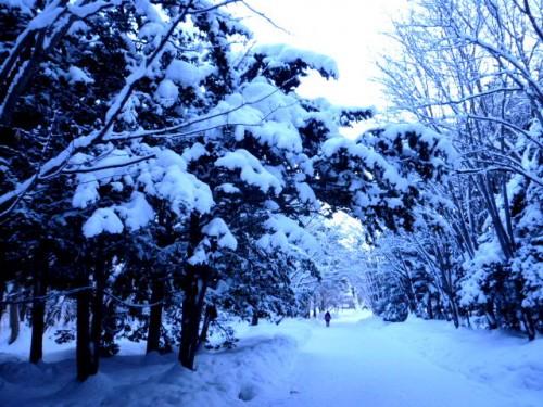 新雪の北海道神宮境内