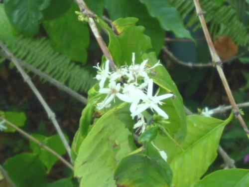 真っ白い繊細な花