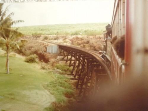 サトウキビ列車でのハワイアンソングも雰囲気がよかったけど・・・
