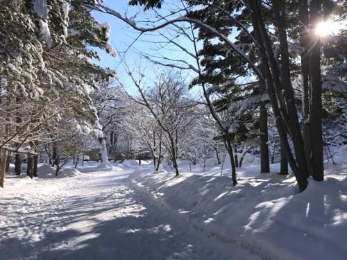 葬儀の朝、北海道神宮境内は前日からの真っ白な雪