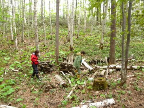 湿地にホダ木ほかの植菌された材