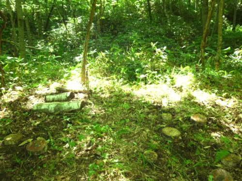 ササ他が繁茂するキノコプロジェクトの現場