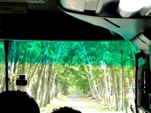 入口は林の並木道