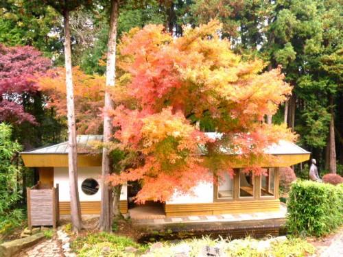 茶室はまた別の秋