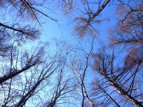 3月の学校林の空